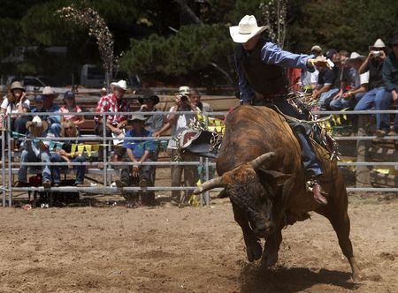 arena rodeo: Rodeo rider on a bull