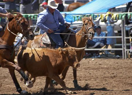arena rodeo: Steer Wrestling Stock Photo
