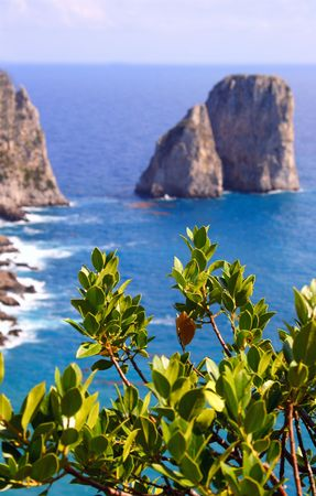 Capri island view from plant photo