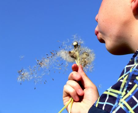 Young boy blowing spring flower photo
