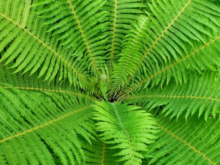 Tropical fern photographed from above