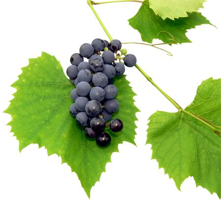 Black grape with leaf - isolated on white Stock Photo