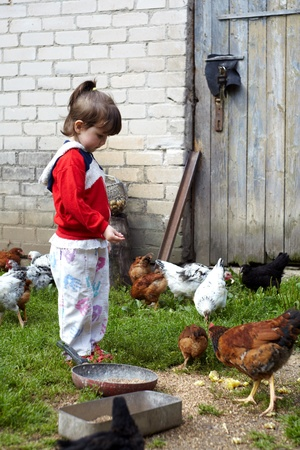 Girl feeding chickens in Lithuanian farm photo