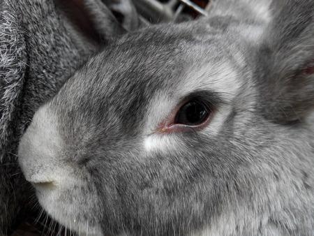 Animals Rabbit