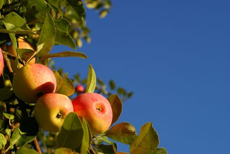 Red apples and leaves on blue sky