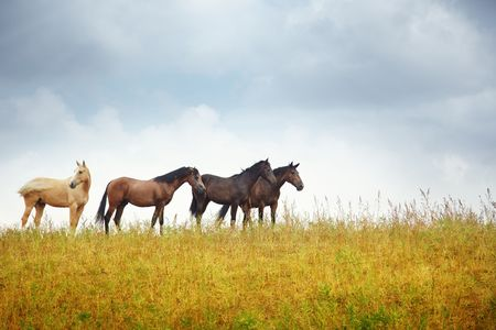 Four horses in the steppe. Kazakhstan. Middle Asia. Natural light and colors Stock Photo - 7915303