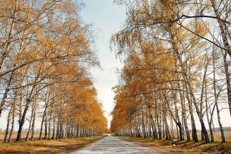 Perspective view onto the road between trees in late autumn. Natural light and colors Stock Photo - 8038903