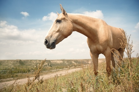 Single horse outdoors in the steppe. Kazakhstan. Natural colors and light