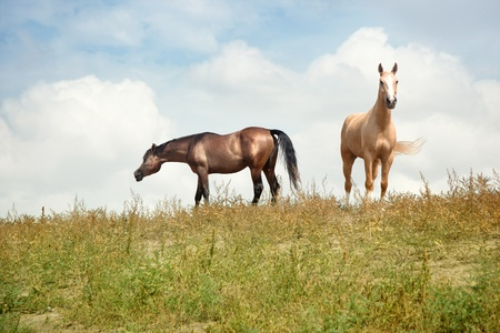 Two horses outdoors. Natural light and colors. Kazakhstan photo