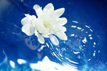 White flower flowing on a blur water. Shallow depth of field added by macro lens for natural view photo
