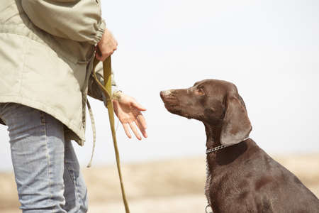 allegiance: German short-haired pointer Kurzhaar and trainer outdoors. Natural light and colors Stock Photo
