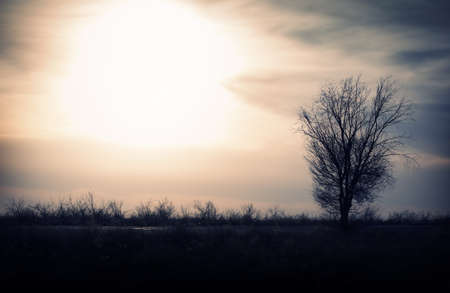Silhouette of the single tree in the field. Natural light and shadows Stock Photo - 9506222