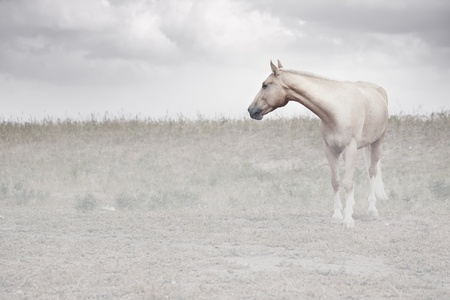 Horse in the foggy steppe. Middle Asia. Natural light and colors photo