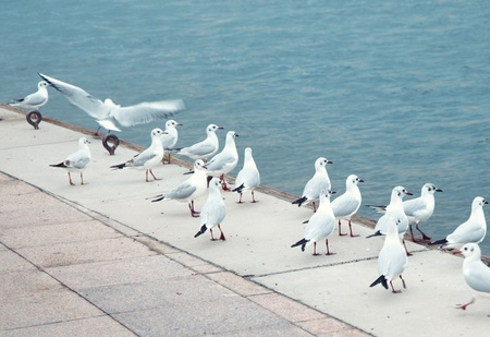 Flock of the wild seagulls standing at manmade pier and looking to the sea photo