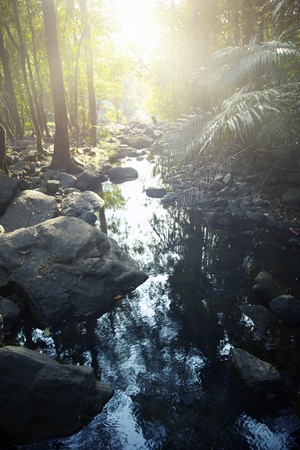 brushwood: Small river in the rainforest. Vertical photo with natural colors and darkness Stock Photo