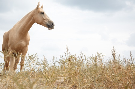 horses in the wild: Horse outdoors standing in the field