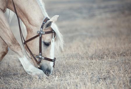 autumn horse: Chestnut horse feeding in the steppe Stock Photo