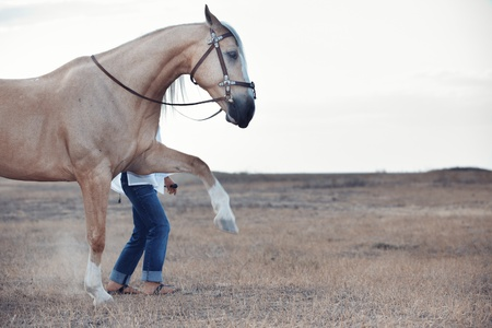 Woman training the horse to walk outdoors Stock Photo - 16304726