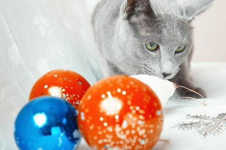 Cat and Christmas balls. photo