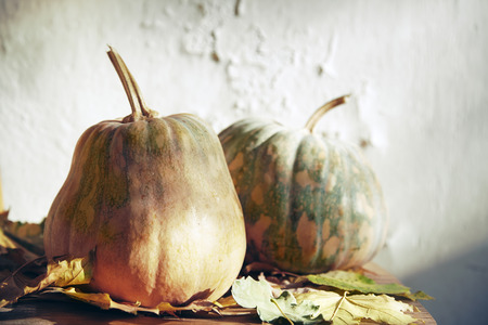 leafage: Pumpkins for Halloween with autumn leaves.