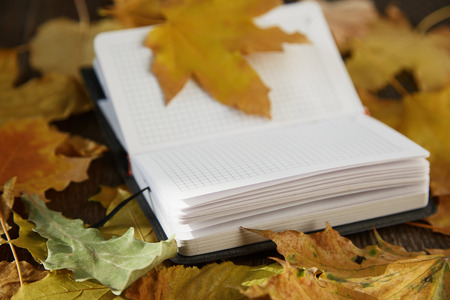 herbarium: Close-up view on a blank notepad with autumn leaves