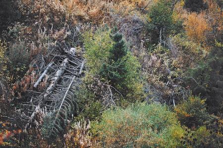 arboles secos: Bosque con los árboles muertos. Foto horizontal
