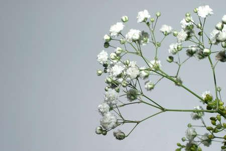 Peque�as flores blancas sobre Gray  Foto de archivo