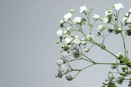 Small white flowers over gray
