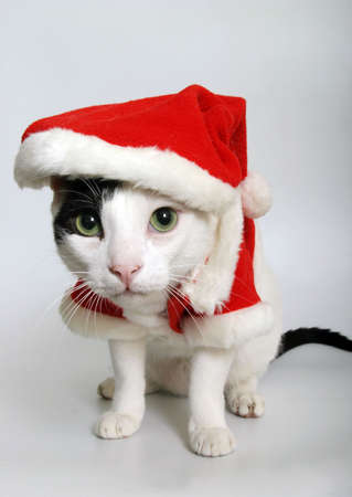 A cat wearing a red Santa suit photo