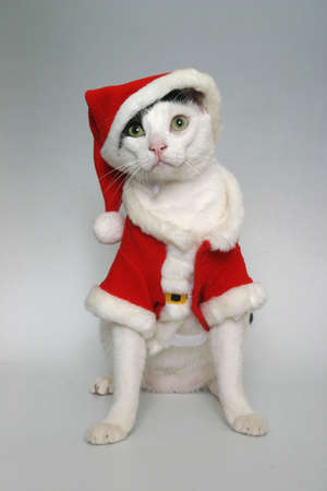 A cat wearing a red Santa suit Stock Photo - 2167266