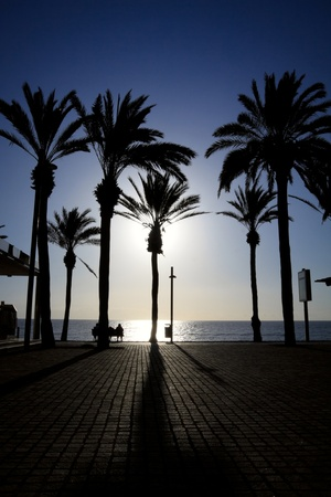 Palm trees standing on the ocean seafront in a low sun light. Las Americas, Tenerife. Stock Photo - 12443695