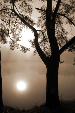 repulse: Silhouette of a tree on a backgrouônd of lake in a fog Stock Photo