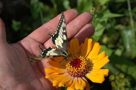 trustful: The trustful butterfly.