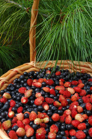 Mix of wood berries: wild strawberry and a bilberry photo