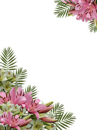 lilas: Framework from flowers of a natural pink  and white lilas