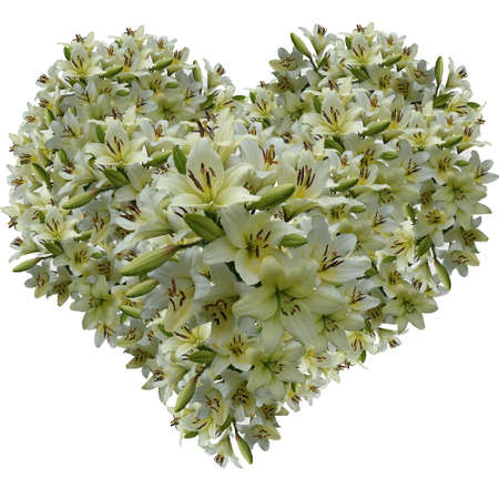quivering: Gentle heart from petals of a white lily Stock Photo