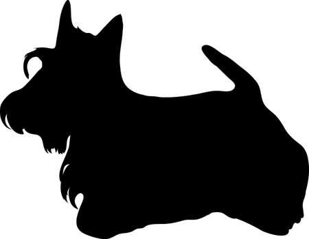 The Scottish terrier photo