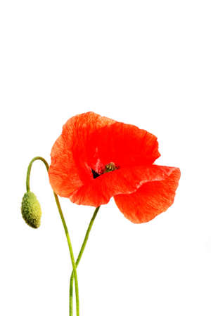 Poppies Stock Photo - 1193210
