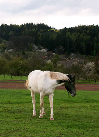 provincial: horse on the meadow Stock Photo