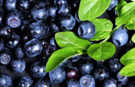 bilberries: beautiful blue bilberries