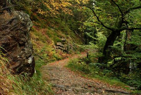 krkonose: forest road Stock Photo