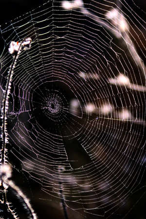 entanglement: spiderweb Stock Photo