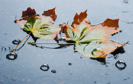 of fading autumn in rainy day photo