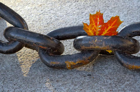 fading:  of fading autumn and rusty chain