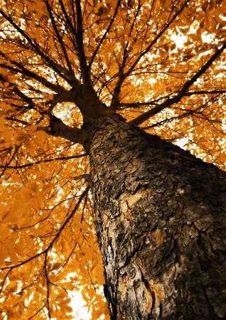 shaggy: shaggy surface of chestnut  bark