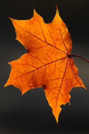 especially: In beams of the morning autumn sun the foliage looks especially beautifully