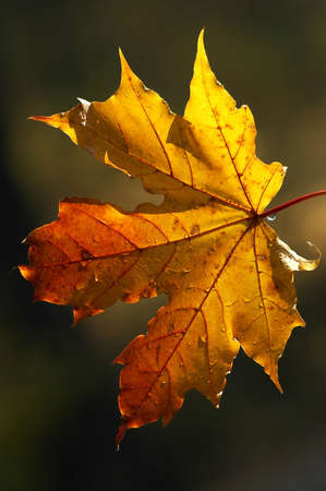 trio: En las vigas de la ma�ana el sol de oto�o el follaje se ve especialmente bellamente