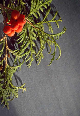 bunchy: Expectation of Christmas fur-tree
