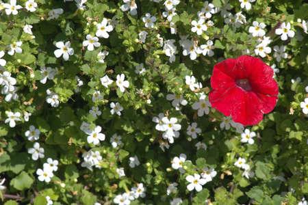 phallic: Un rojo-blanco entre multi-color cama  Foto de archivo