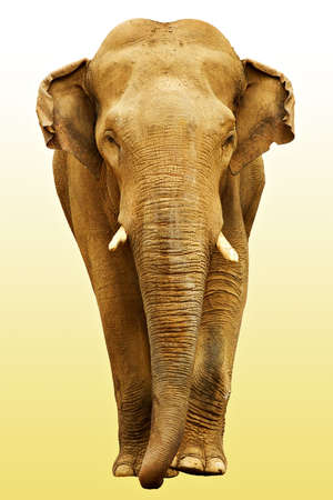 human skin texture: The elephant going towards (with ) Stock Photo